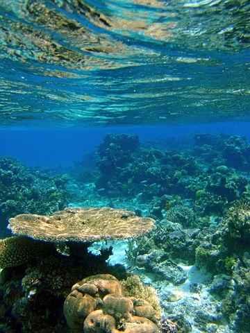 Fiji coral under water