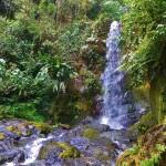 Pittier Park Costa Rica